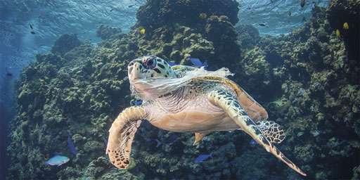 Le raz de marée des déchets plastiques est évitable, mais …