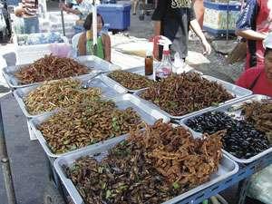 L'entomophagie, parade aux futures pénuries alimentaires