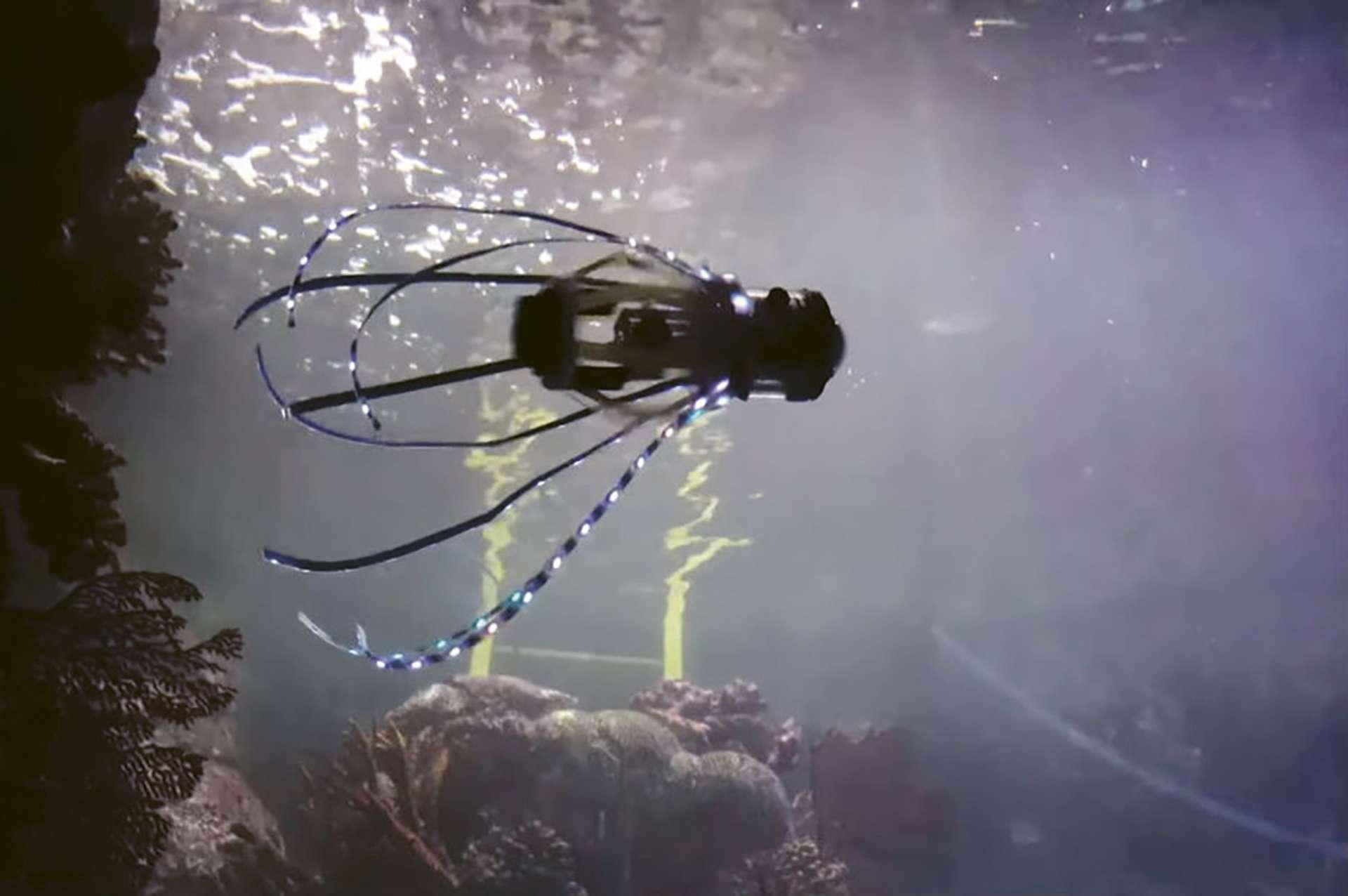 Un «robot calmar» pour explorer les environnements marins